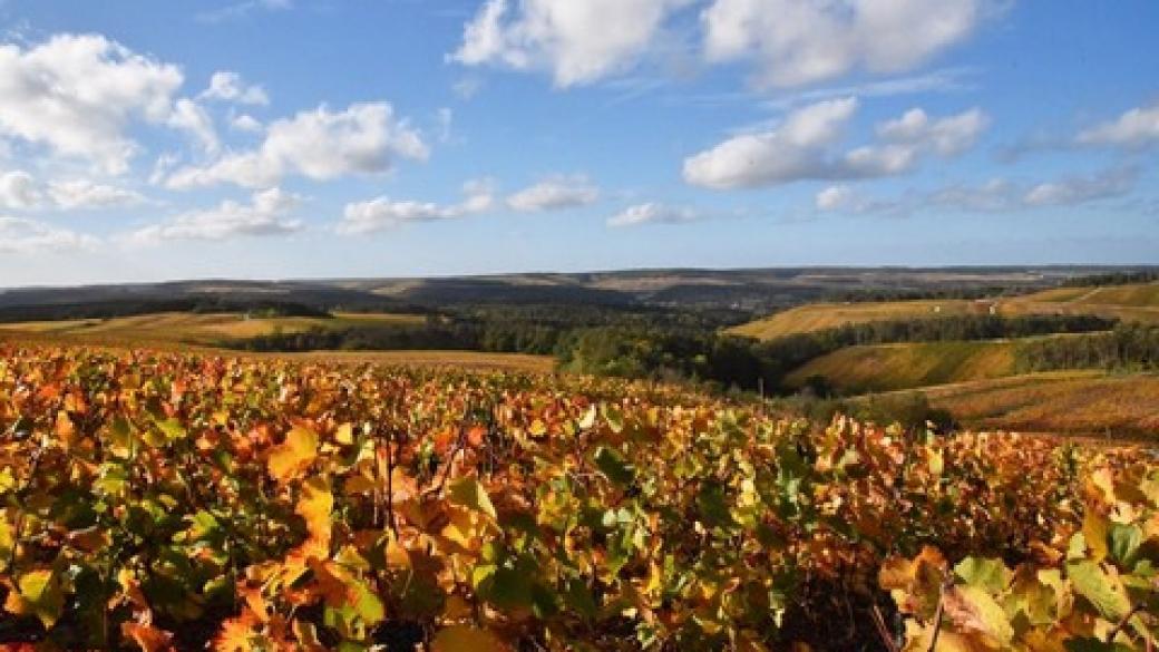 découvrir l'Aube en Champagne, La valise à fleurs blog partenaire hémisphère Sud